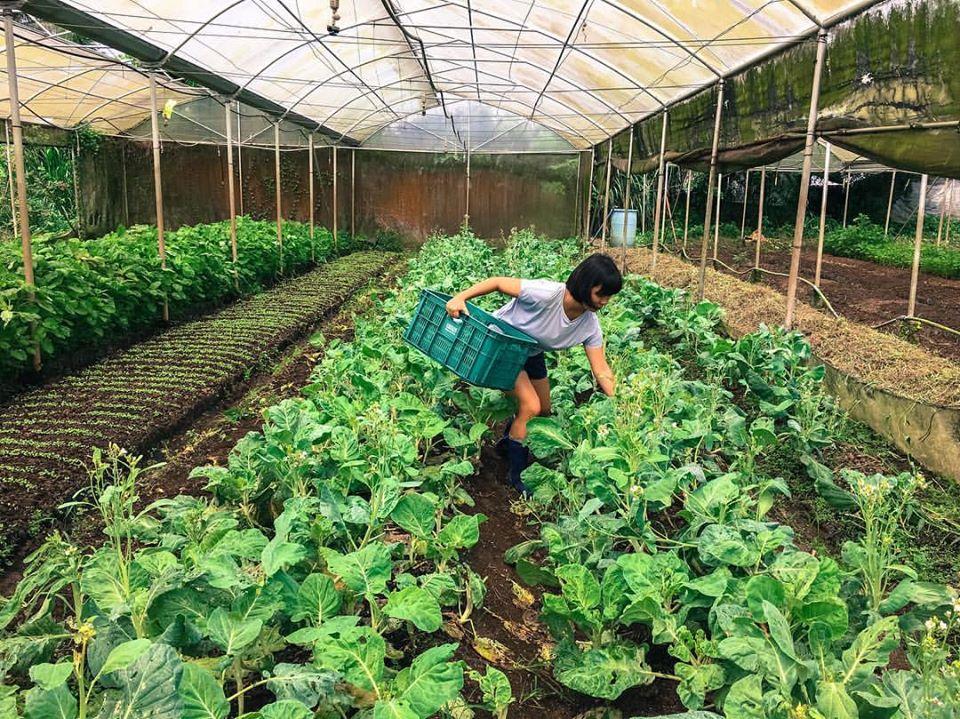 farmstay-ket-hop