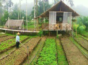 mo hinh farmstay dep